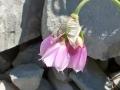 ailafleursdenarcisse