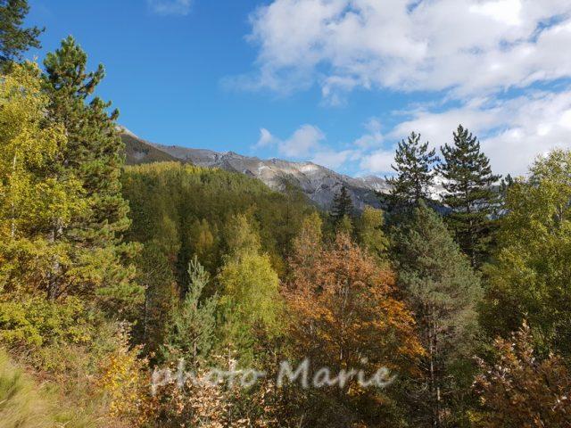 le forêt domaniale de la Blanche